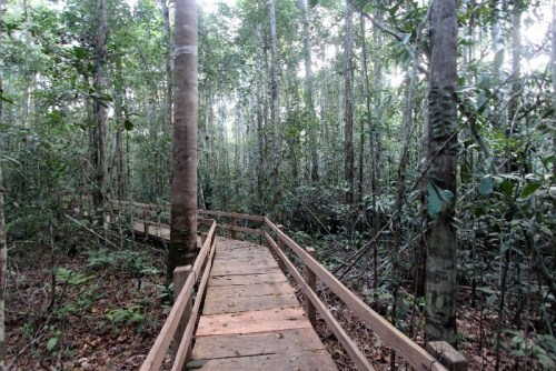 Parque Pau Brasil em Porto Seguro será privatizado por R$ 7,2 milhões, visitante pagará por tudo 1