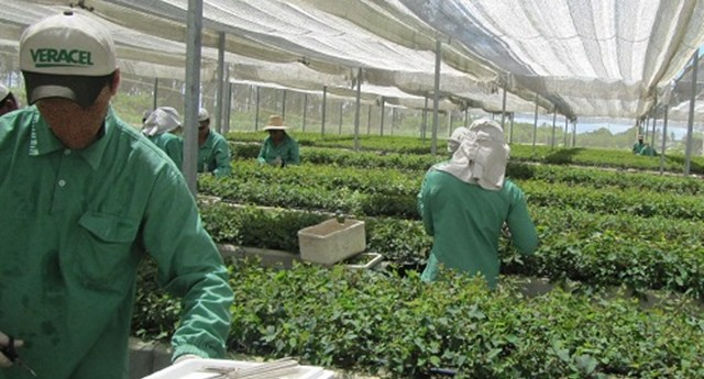 Veracel Celulose divulga edital para contratação de analista de operações florestais 29