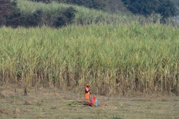Mulheres na Índia removem o útero para conseguir emprego 1