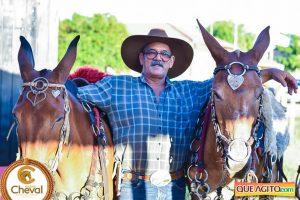 7º Encontro Amigos do Cavalo de Canavieiras foi um sucesso 10