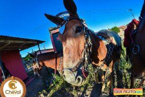 7º Encontro Amigos do Cavalo de Canavieiras foi um sucesso 17
