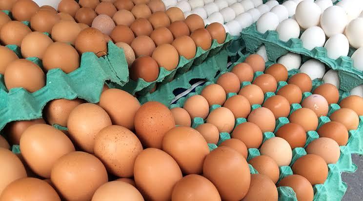 Brasil bate recorde histórico no consumo de ovos 1
