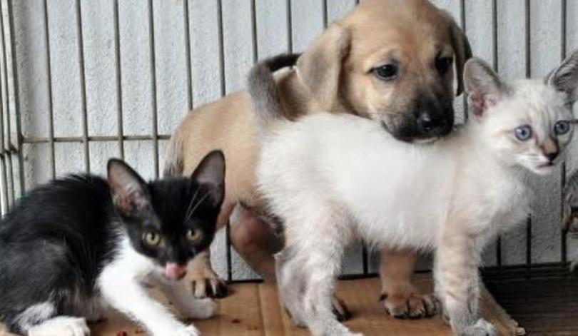 CCZ realiza feira de adoção de cães e gatos nesta sexta-feira 18