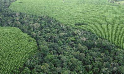Veracel cria canal para receber ocorrências de incêndios florestais 25