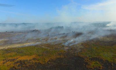 Porto Seguro: Secretaria de Meio Ambiente atua no combate ao incêndio na Aldeia Velha 21