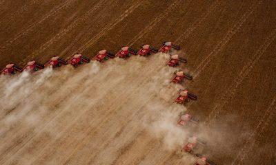 Embrapa: Brasil será maior exportador de grãos do mundo em cinco anos 37