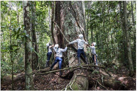 Veracel destaca seu compromisso com a proteção das florestas e recursos hídricos da Bahia 18