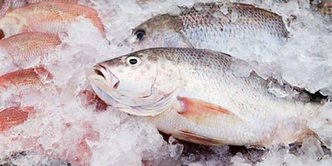 Prefeitura de Eunápolis explica a não distribuição de peixes na Semana Santa 18