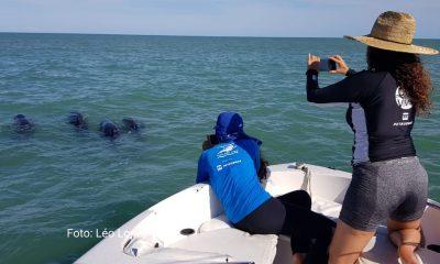 Grupo de golfinhos orca-pigmeias é resgatado em Porto Seguro 21