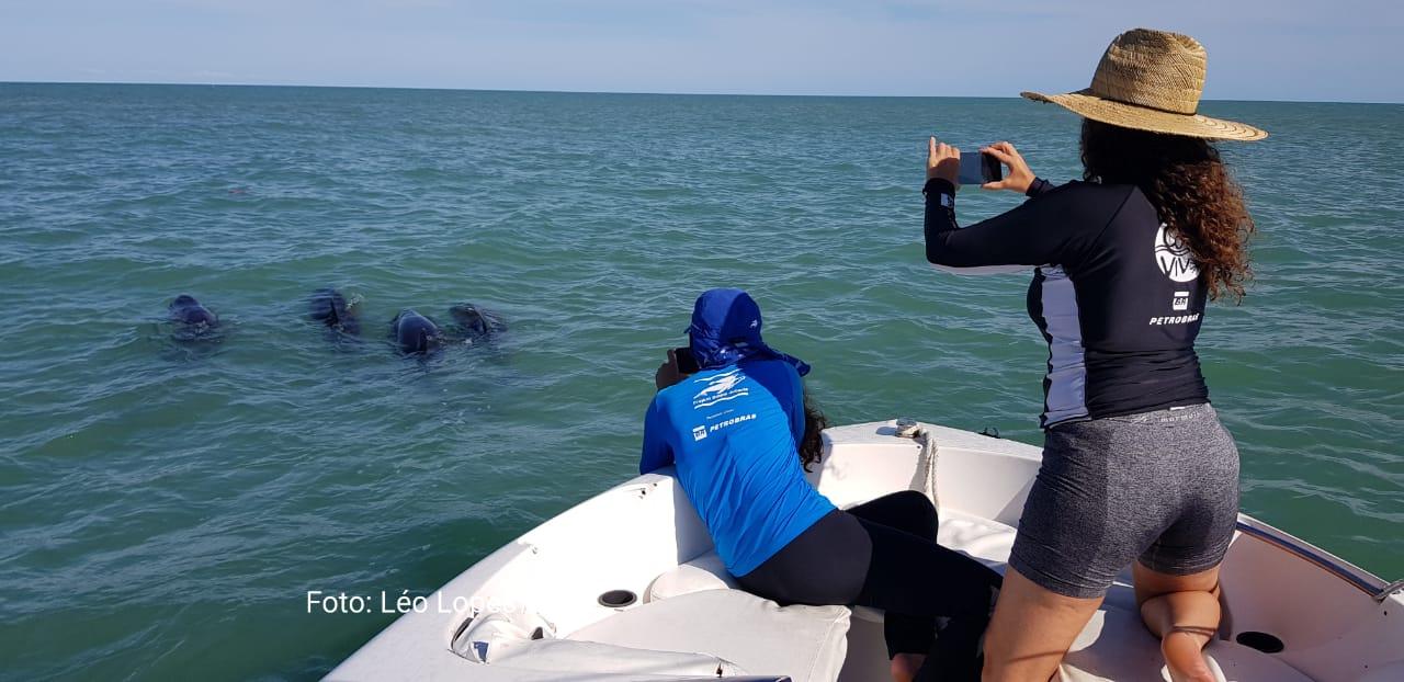Grupo de golfinhos orca-pigmeias é resgatado em Porto Seguro 22