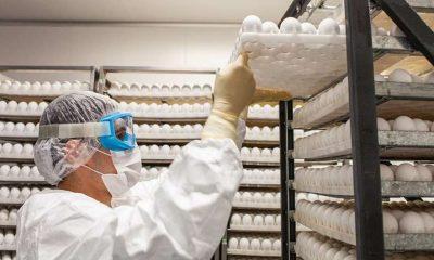Os desafios da ButanVac, que vai usar 20 milhões de ovos de galinha para produzir 40 milhões de vacinas 31