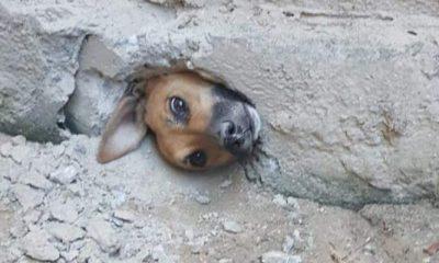 Vira-lata caramelo fica com cabeça presa em buraco após tentar espiar a vizinha; veja fotos 27