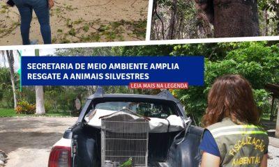 Secretaria de Meio ambiente amplia resgate a animais silvestres 27