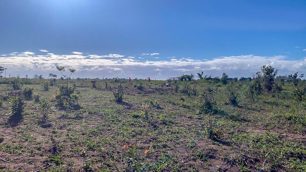 Porto Seguro: Secretaria de Meio Ambiente impede invasões de áreas municipais 27