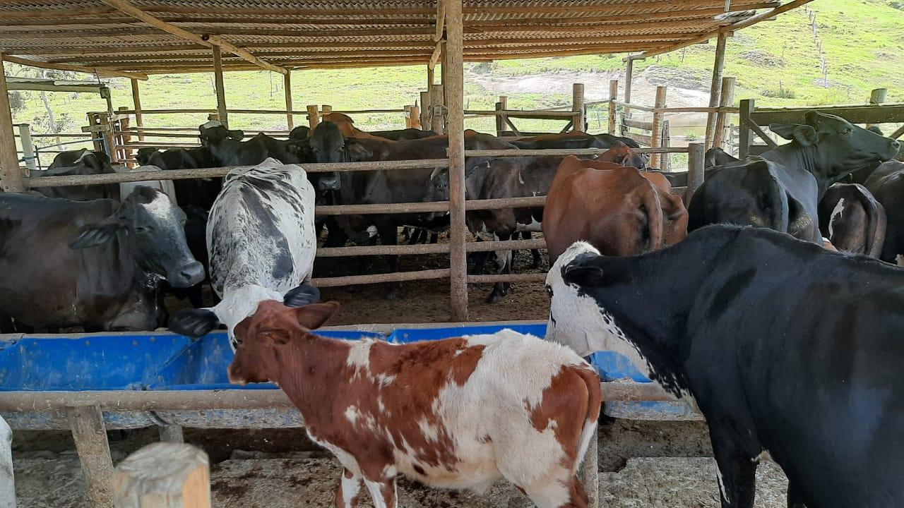 Guaratinga atinge marca de 420 animais atendidos pelo serviço veterinário gratuito 20