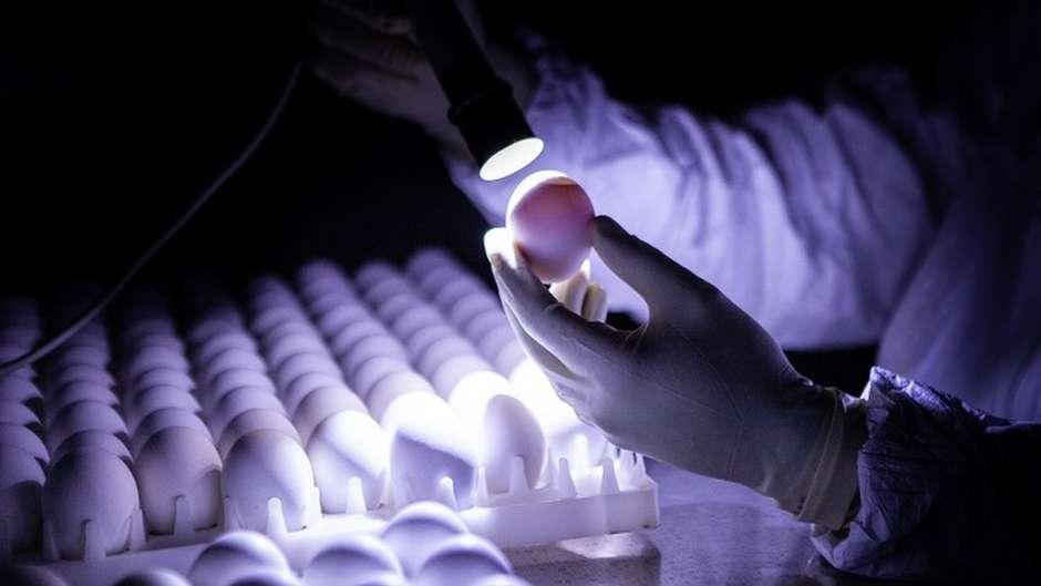 Os desafios da ButanVac, que vai usar 20 milhões de ovos de galinha para produzir 40 milhões de vacinas 24