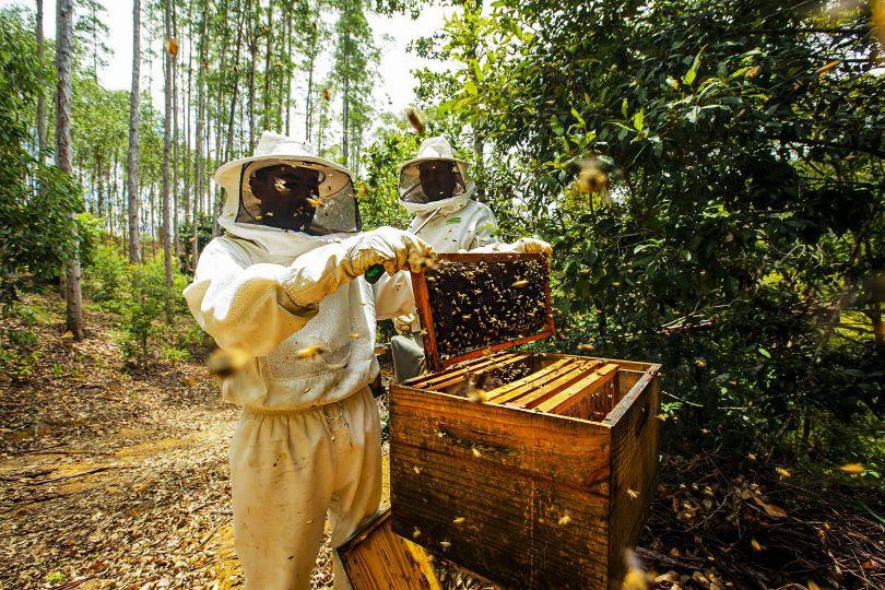 Veracel destaca resultados dos projetos de apicultura realizados com produtores da região Sul da Bahia 18