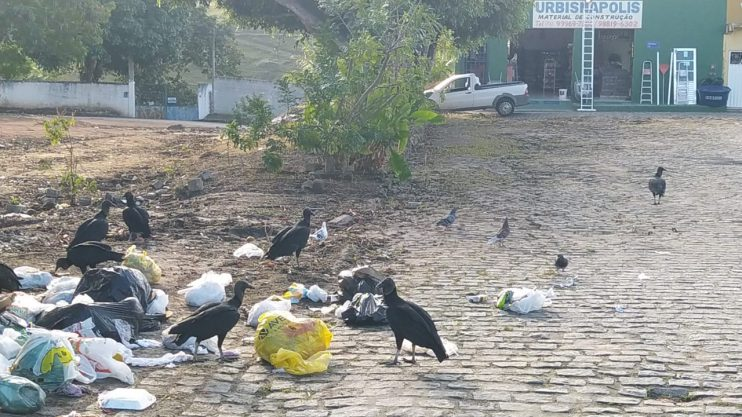 Consciência cidadã faz uma cidade limpa 22