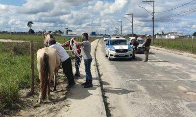 CCZ intensifica apreensão de animais nos espaços públicos de Eunápolis 96