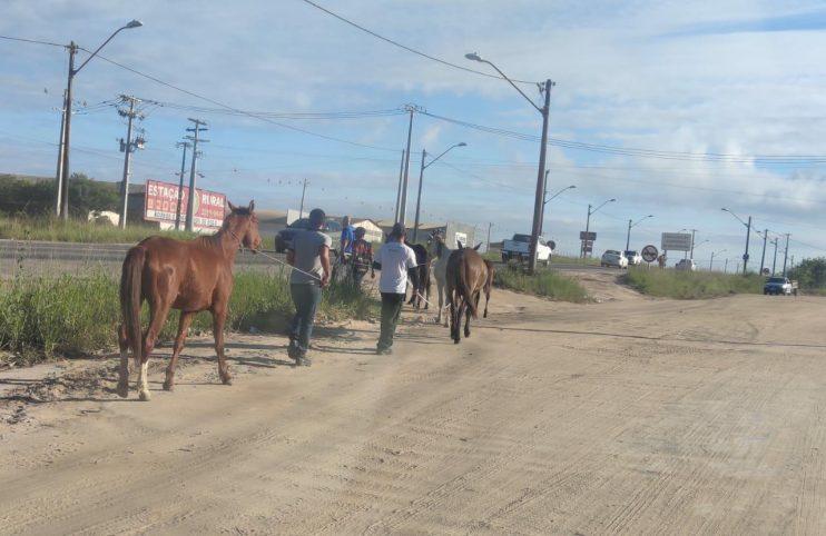 Diminui número de ocorrências com animais de grande porte em ruas e avenidas de Eunápolis 21