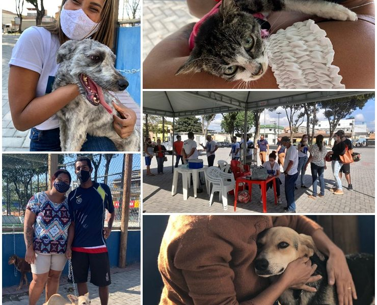 Sucesso absoluto na primeira feira 2021 de adoção de cães e gatos 46