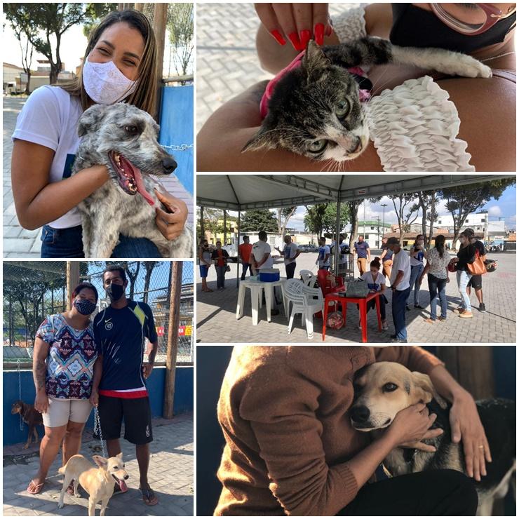 Sucesso absoluto na primeira feira 2021 de adoção de cães e gatos 18