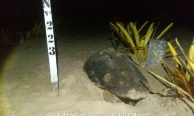 Veracel divulga resultados do monitoramento da última temporada reprodutiva de tartarugas marinhas 94
