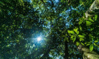 Veracel participa de nova plataforma da rede WWF que visa atingir metas de sustentabilidade 103