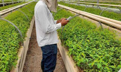 Veracel implementa processo digital de monitoramento de pragas e doenças no viveiro de mudas de eucalipto 25