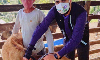 Vacinação contra a Febre Aftosa é sucesso em Porto Seguro 30