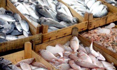 """Doença """"urina preta"""" pode estar relacionada a consumo de frutos do mar 135"""