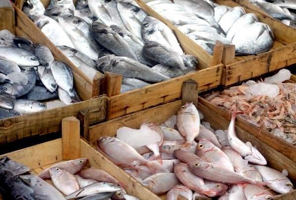 """Doença """"urina preta"""" pode estar relacionada a consumo de frutos do mar 23"""