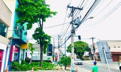 Prefeitura de Eunápolis remove árvore que oferecia risco à população 17