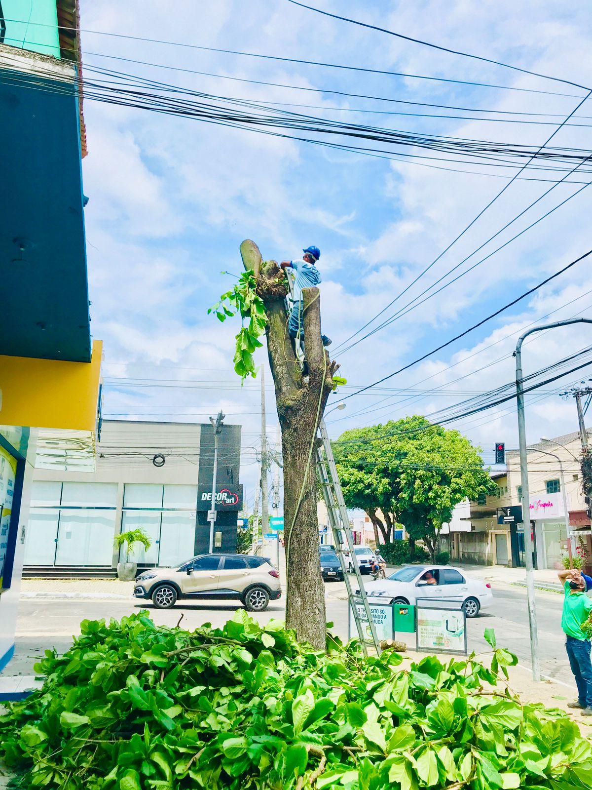 Prefeitura de Eunápolis remove árvore que oferecia risco à população 23