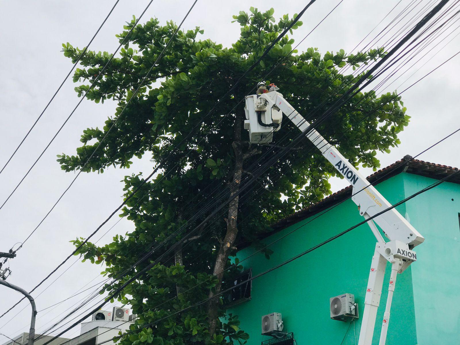 Prefeitura de Eunápolis remove árvore que oferecia risco à população 22