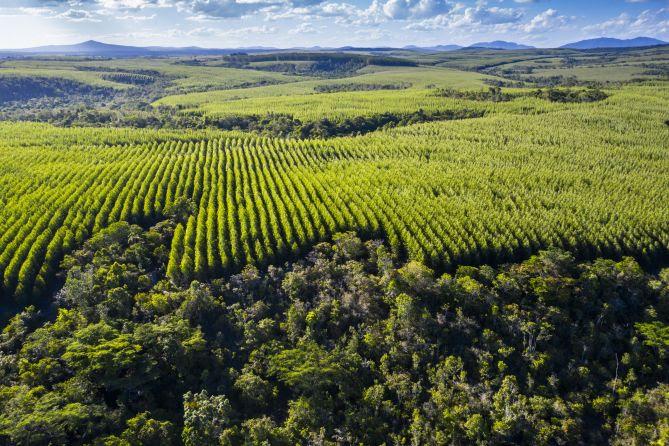 Eucalipto é alternativa de negócio para produtores rurais baianos 21