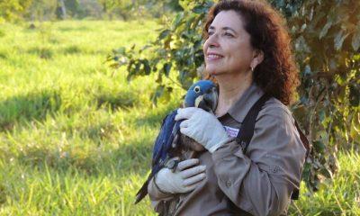 Bióloga brasileira que salvou araras-azuis da extinção entra para o Hall da Fama da ONU 5