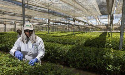 Tecnologia é desenvolvida para recomendação de plantio de eucalipto e aumento de produtividade 23