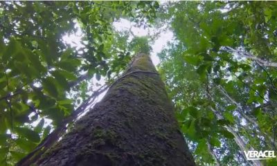 Veracel divulga resumo público de seu plano de manejo florestal 41