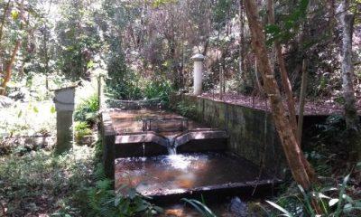 Manejo de florestas de eucalipto não impacta a qualidade da água de microbacias: É o que revela resultados de 15 anos de monitoramento no Sul da Bahia 31